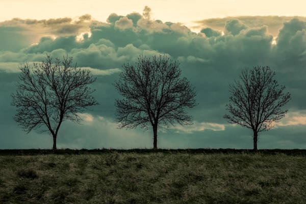 Three Trees Photograph - Stand Against The Storm by Todd Klassy