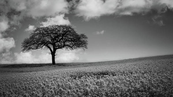Nottinghamshire Photograph - Stand Alone by Chris Dale