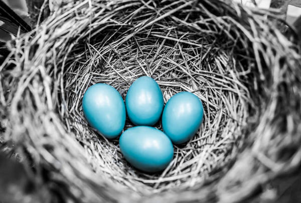 Birds Eggs Photograph - Stand Out  by Parker Cunningham