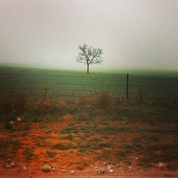 Standing Alone, A Lone Tree In The Fog. Art Print