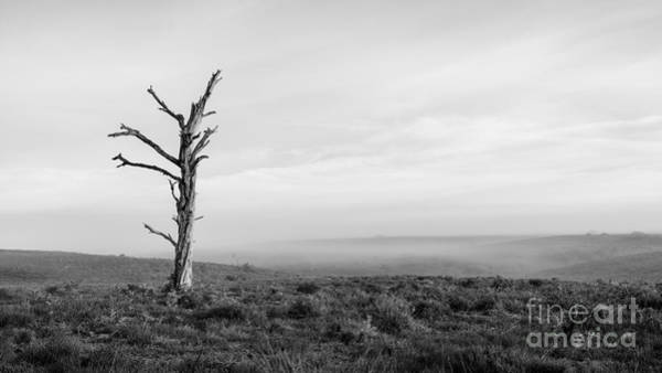 Wall Art - Photograph - Standing In Light New Forest by Richard Thomas