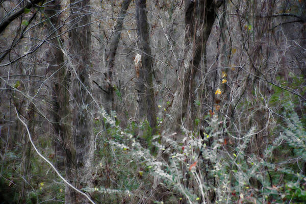 Photograph - Standing In The Woods by Gina O'Brien