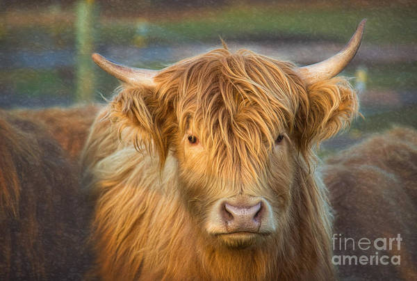 Wall Art - Photograph - Standing Out In The Herd by Sharon McConnell