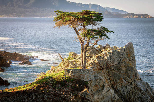 Carmel By The Sea Photograph - Standing Proud by Aron Kearney