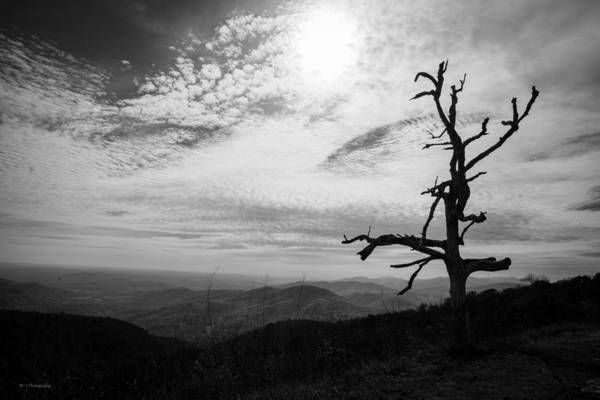 Photograph - Standing by Ross Henton
