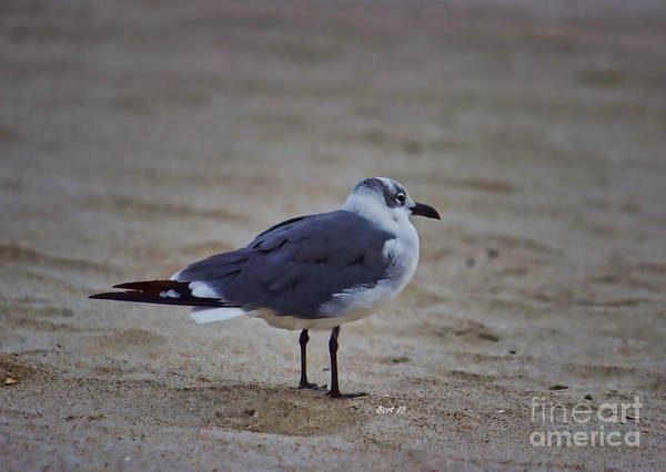Photograph - Standing Still Bird by Roberta Byram