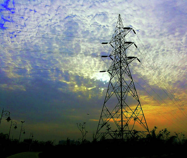 Photograph - Standing Tall by Atullya N Srivastava