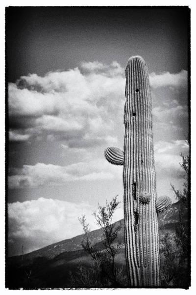 Wall Art - Photograph - Standing Tall by Michael McGowan