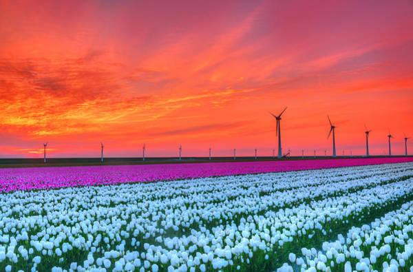 Wind Generator Photograph - Standing Tall by Midori Chan