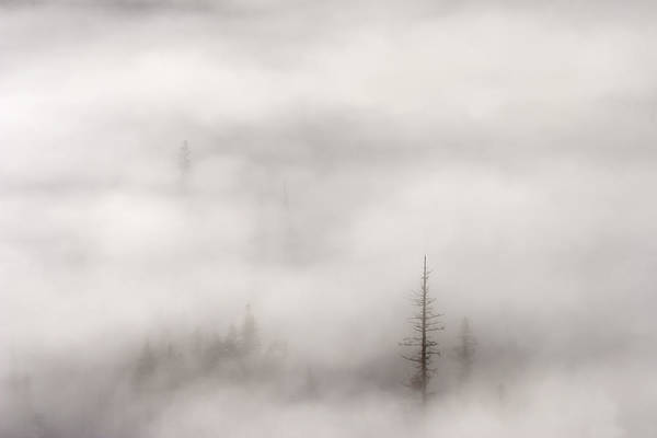 Trees In Fog Photograph - Standing Tall by Mike  Dawson
