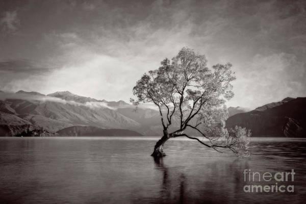Photograph - Standing Tall by Scott Kemper