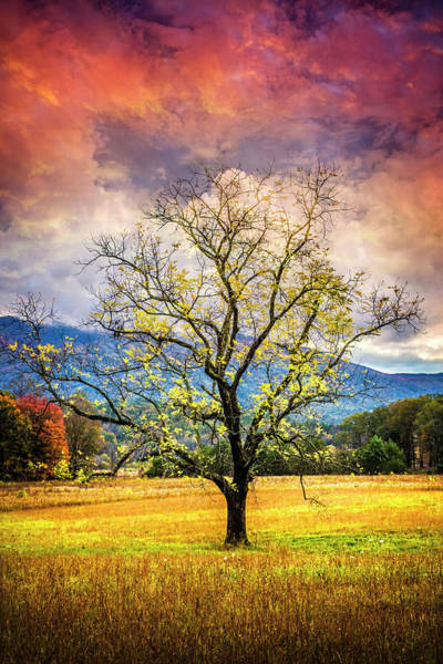 Photograph - Standing The Test Of Time by Debra and Dave Vanderlaan