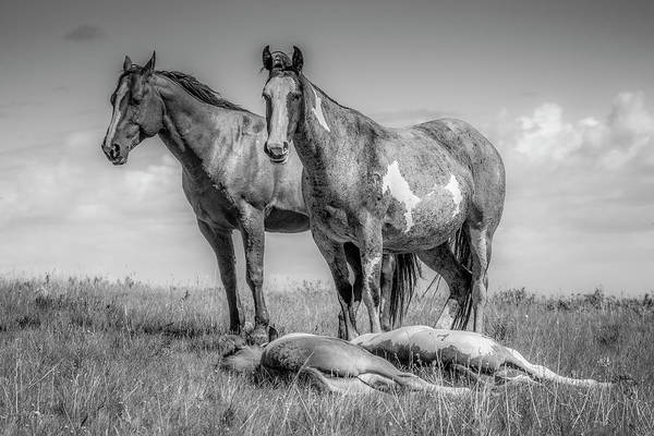 Photograph - Standing Watch Over The Foals - Black And White by Teresa Wilson