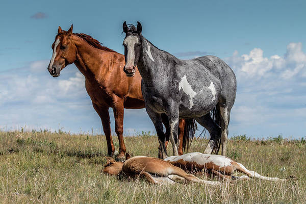Photograph - Standing Watch Over The Foals by Teresa Wilson