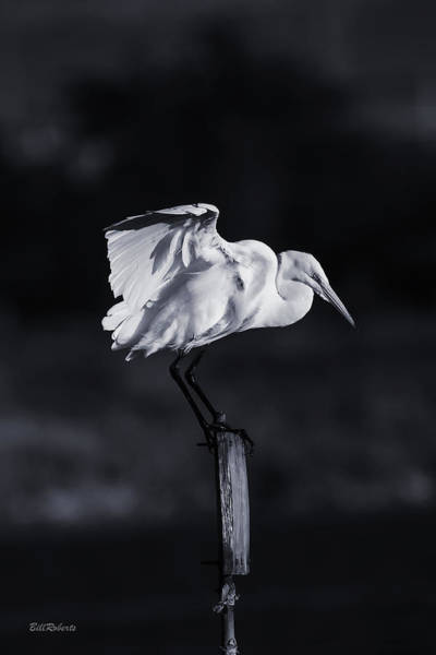 Wall Art - Photograph - Stands Alone by Bill Roberts