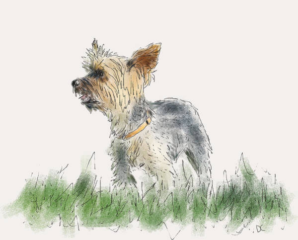 Painting - Stanley by Diane Chandler