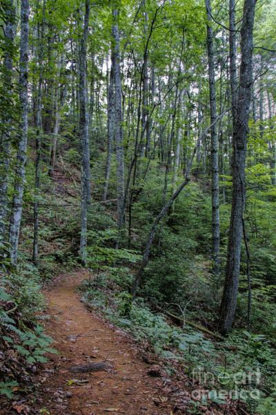 Photograph - Stanly Gap Trail by Barbara Bowen