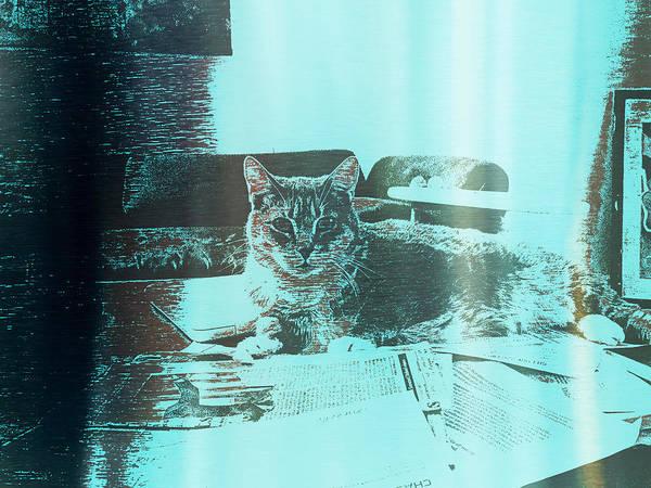 Wall Art - Digital Art - Stanni Cat by Gina Callaghan