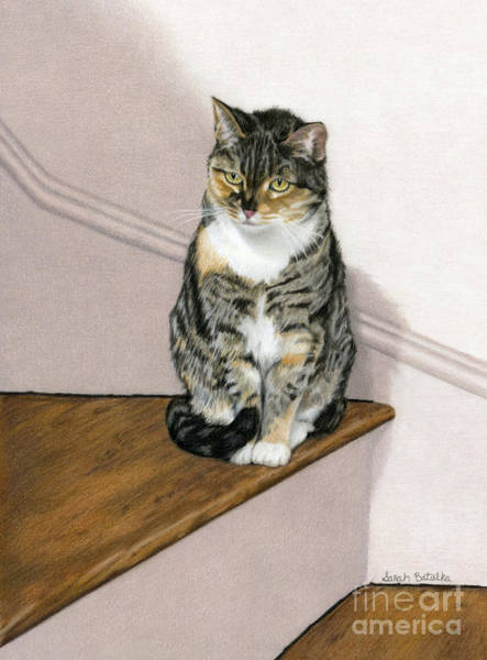 Wall Art - Painting - Stanzie Cat by Sarah Batalka