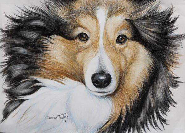 German Shepherd Drawing - Star by Daniele Trottier