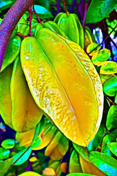 Photograph - Star Fruit by Joan Reese