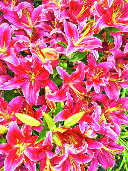Photograph - Star Gazer Lillies by Reynaldo Williams