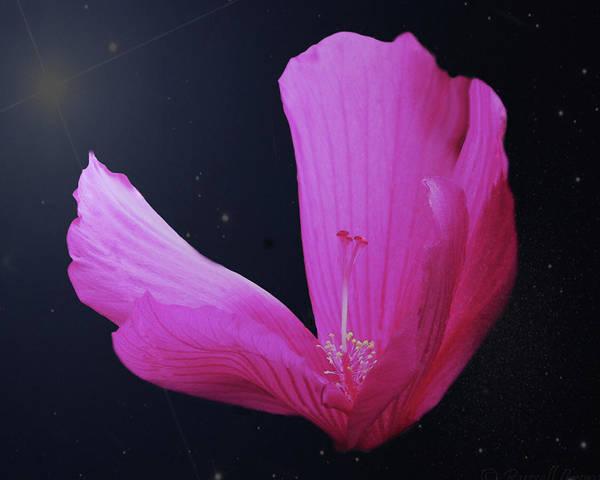 Photograph - Star Struck by Dennis Buckman