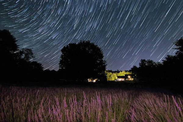Photograph - Star Trails At The Lavender Farm by Kristen Wilkinson