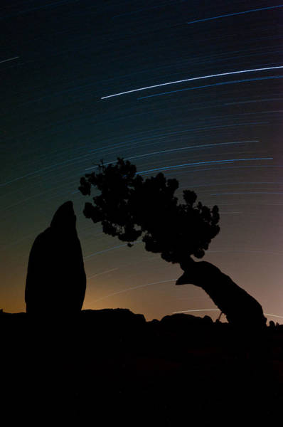 Photograph - Star Trails Over Juniper And Monolith by TM Schultze