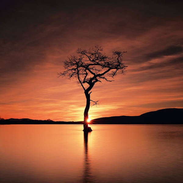 Photograph - Star Tree by Grant Glendinning