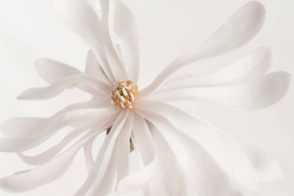 Photograph - Star White 1 by Jill Love