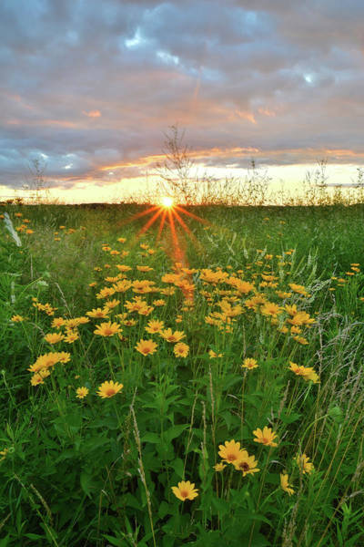 Photograph - Starburst Sunrise In Glacial Park by Ray Mathis