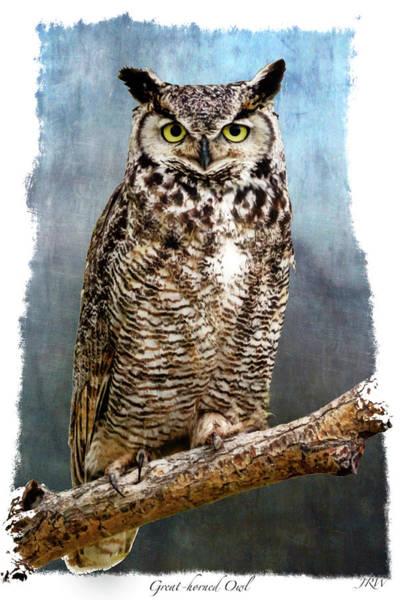 Wildlife Refuge Digital Art - Stare Down by John Williams