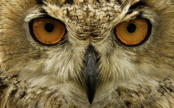 Wall Art - Photograph - Stare Of The Eagle Owl by Chris Whittle
