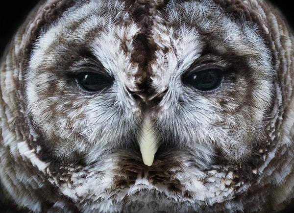 Photograph - Staredown by Bruce Bonnett