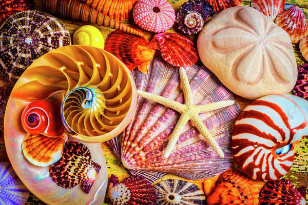 Wall Art - Photograph - Starfish And Nautilus by Garry Gay