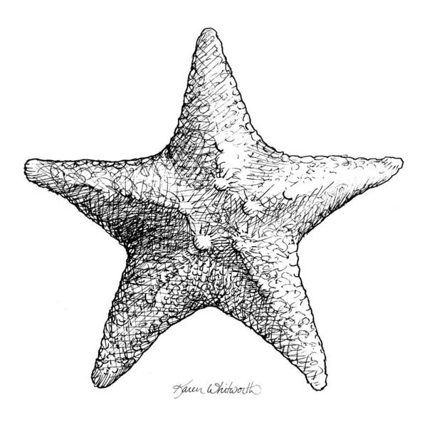 Wall Art - Drawing - Coastal Starfish Drawing - Black And White Sea Star - Beach Decor - Nautical Art by Karen Whitworth