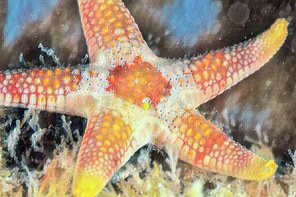 Photograph - Starfish In Gold by Debra and Dave Vanderlaan