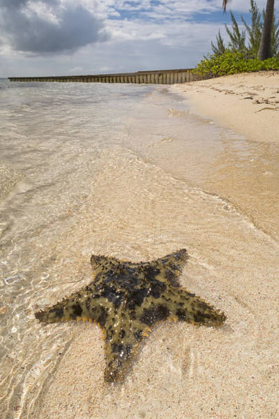 West Point Photograph - Starfish On The Beach At Starfish Point by Adam Romanowicz