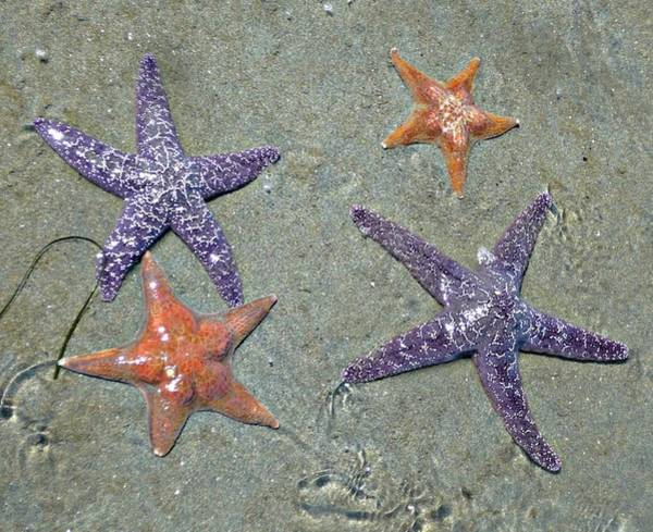 Photograph - Starfish Party by 'REA' Gallery