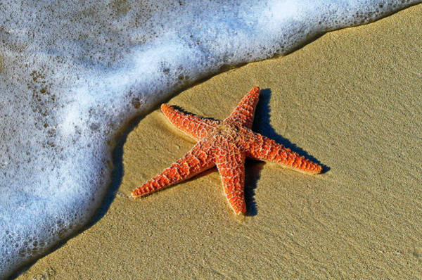 Wall Art - Photograph - Starfish by Happy Home Artistry
