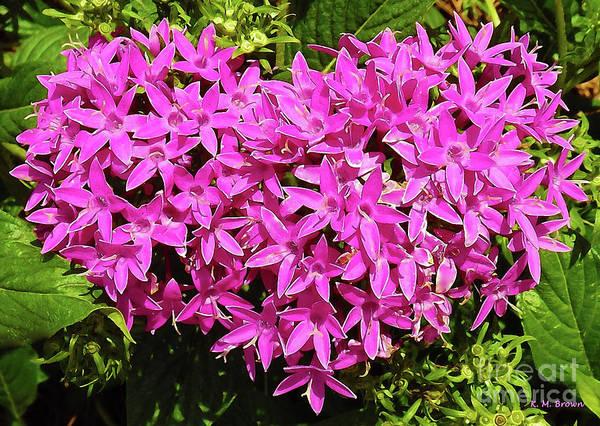 Wedding Bouquet Photograph - Starflower Heart by K Joy Brown