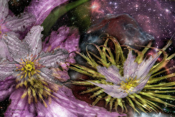 Photograph - Starflower..... by Paul Vitko