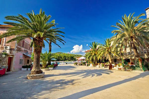 Starigrad Photograph - Stari Grad On Hvar Island Palm Waterfront by Brch Photography