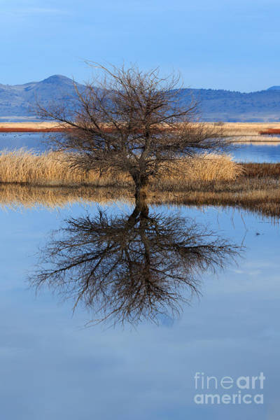 Photograph - Stark Reflections by Beve Brown-Clark Photography