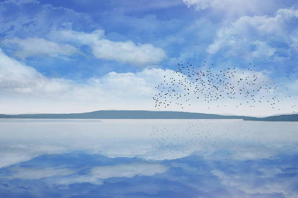 Photograph - Starling Murmuration  by Andrea Kollo