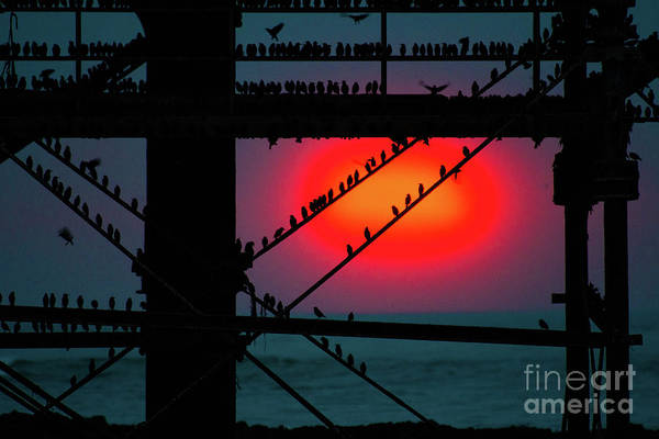 Starlings Against The Setting Sun Art Print