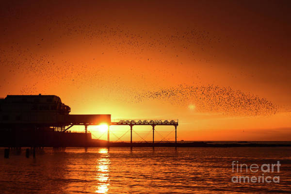 Starlings At Sunset Over Aberystwyth Pier Art Print