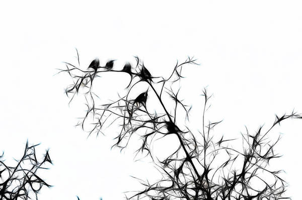 Photograph - Starlings by Lawrence Christopher