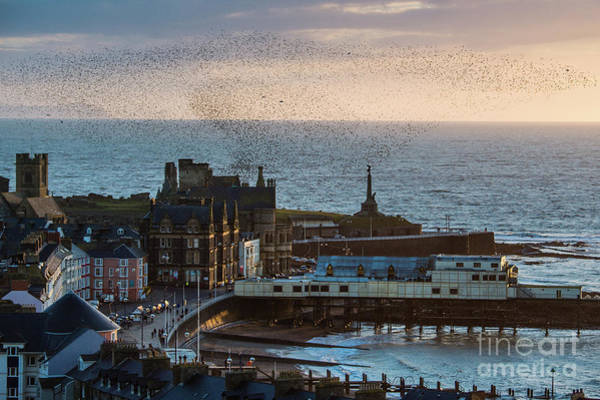Starlings Over Aberystwyth On The West Wales Coast Art Print